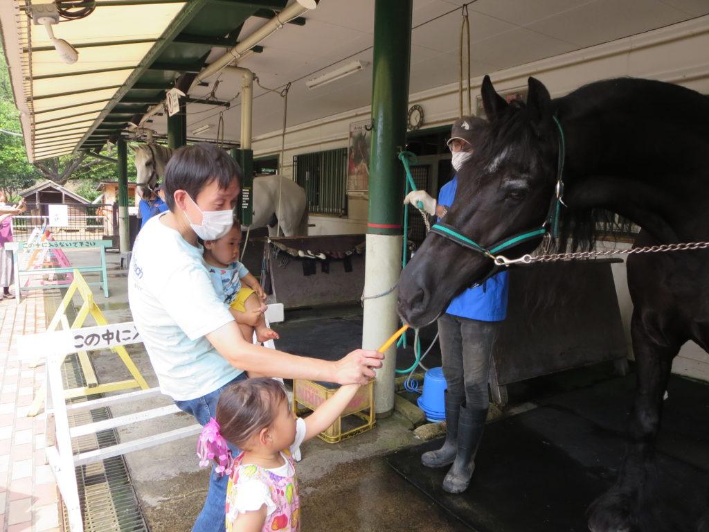 馬の博物館の画像03