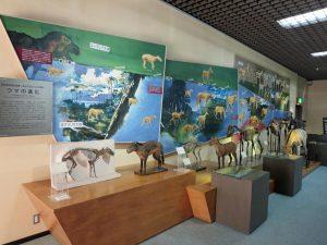 馬の博物館の画像02