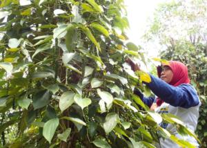 ZOU-NO-HANA FUTURESCAPE PROJECT 拡張ニュー屋台 / Yokohama Expantion Eating 「純胡椒から見る 森林と農業と生物多様性の話」の画像